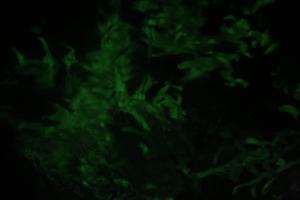 Dinos_leuchten